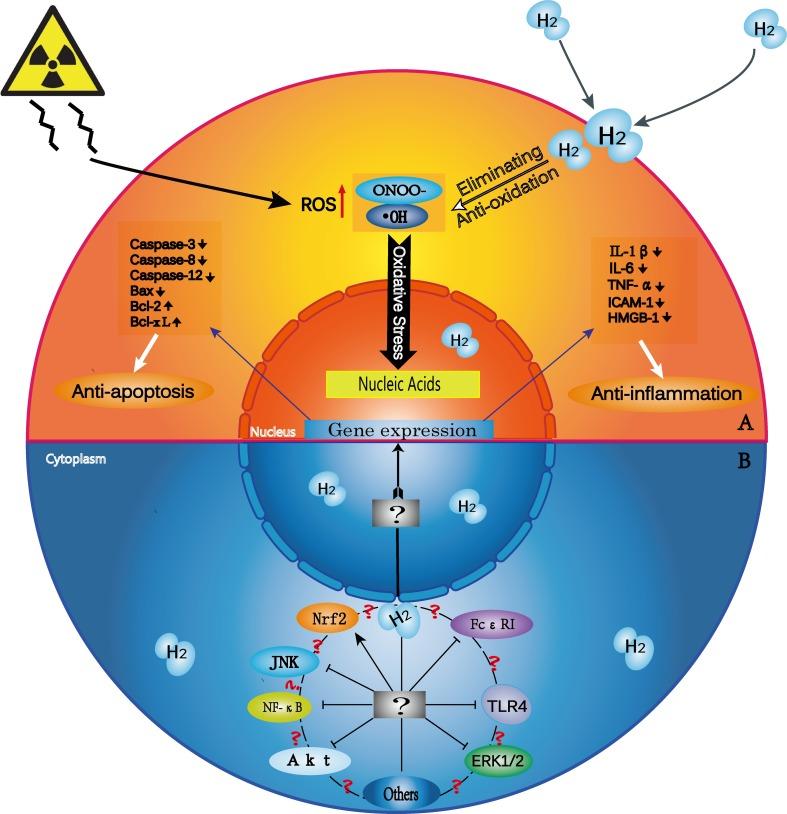 Potencjalne mechanizmy wodoru, jako środka terapeutycznego